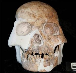 dientes fosiles