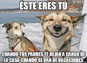 meme perro feliz
