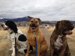 perro feliz 5
