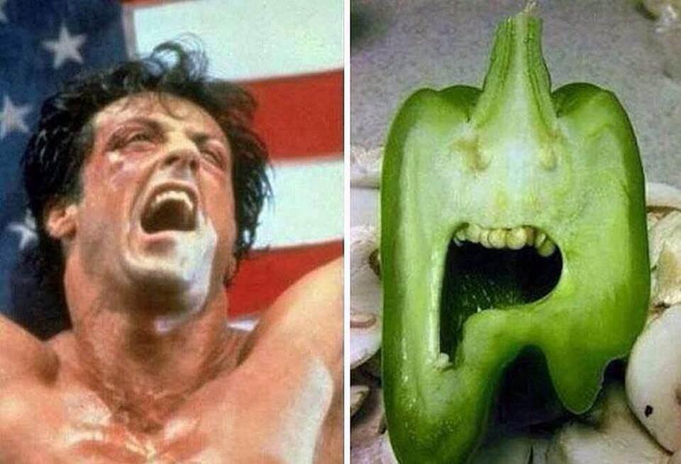 ROCKY y sus dientes