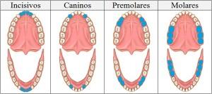 dientes-mirada-antroposófica