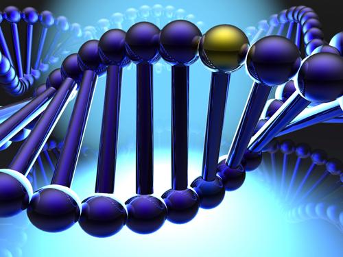 Golden gene in DNA