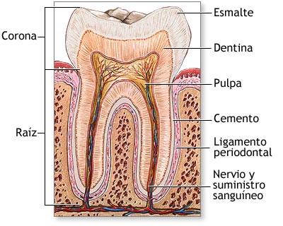 esmalte-dental-odontonews