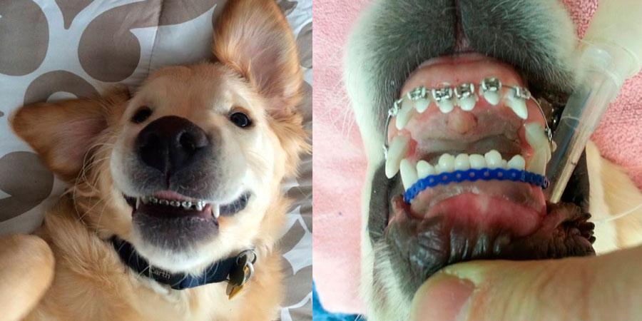 ortodoncia para perros